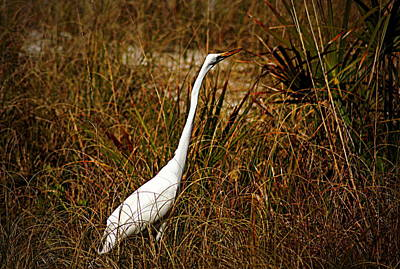 World War 2 Action Photography - Egret by Paul Wilford