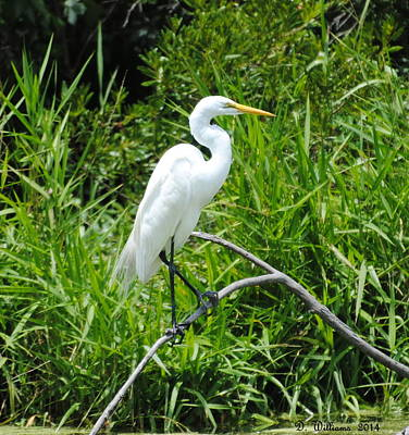 Egret Perching On Branch Art Print
