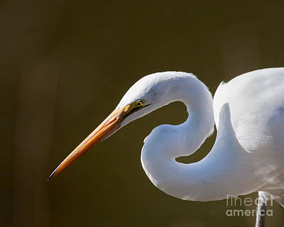 Photograph - Egret Portrait-2 by Dale Nelson