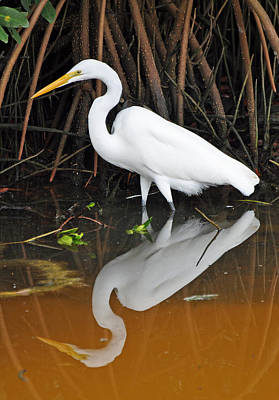 Egret Reflected In Orange Waters Art Print