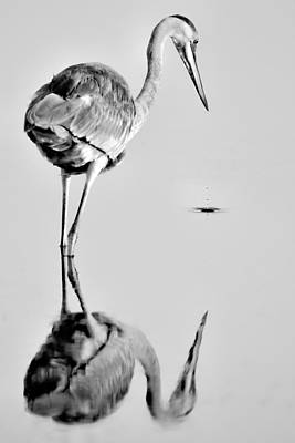 Photograph - Egret Reflection by Celso Diniz
