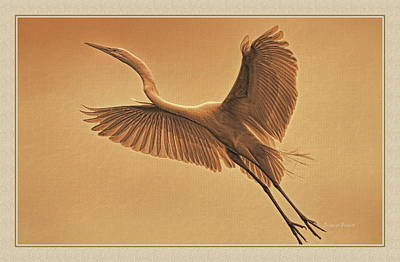 Egret Sepia Art Print by Deborah Benoit