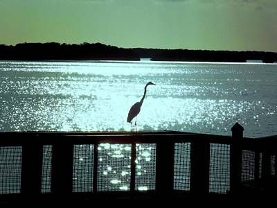 Photograph - Egret Silhouette  by Jeanne Donnelly