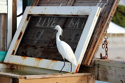 Photograph - Egret Smorgasbord by Jo Sheehan