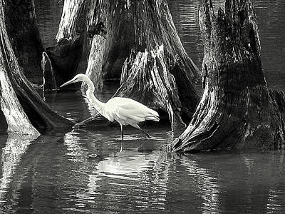 Photograph - Egret Solitude by Suzy Piatt