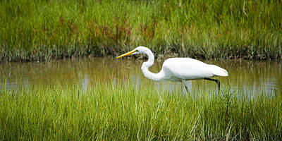 Photograph - Egret Stalking Fish by Crystal Wightman