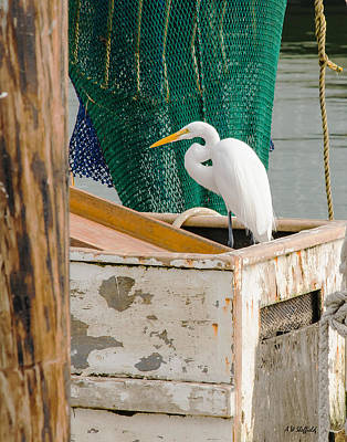 Egret With Fishing Net Art Print