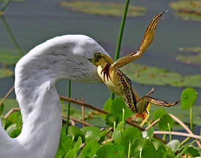 Photograph - Egret With Frog by Ira Runyan