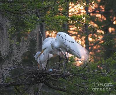 Photograph - Egrets At Nest by Lizi Beard-Ward