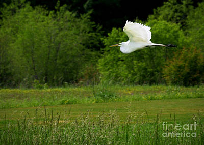 Egret's Flight Art Print