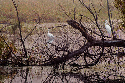 Photograph - Egrets In Their Habitat by Gene Sherrill