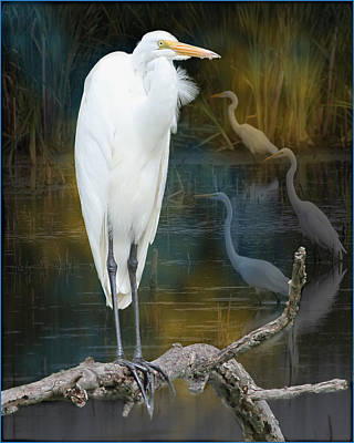 Photograph - Egrets by John Kunze