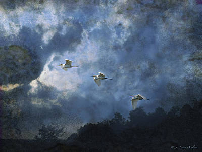 Digital Art - Egrets Morning Fly by J Larry Walker