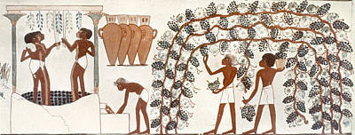 13th Century Painting - Egypt Grape Pressing by Granger