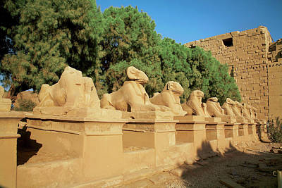 Egypt, Luxor, Avenue Of Sphinxes, Ram Art Print by Miva Stock