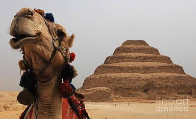 Camel Photograph - Egypt Step Pyramid Saqqara by Bob Christopher