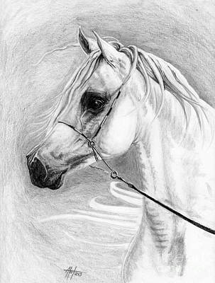 Drawing - Egyptian Arabian Mare by Audrey Van Tassell