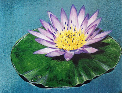 Photograph - Egyptian Lotus Water Lily by David Clode