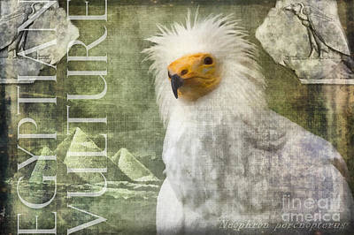 Digital Art - Egyptian Vulture by Nola Lee Kelsey
