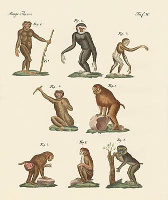 Primate Drawing - Eight Kinds Of Monkeys by Splendid Art Prints