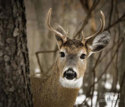 Photograph - Eight Point Buck by Ronald Grogan
