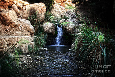 Photograph - Ein Gedi National Park  by Doc Braham