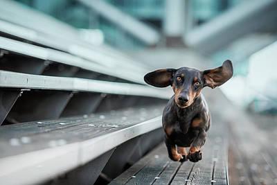 Ein Kleiner Hund La?uft Durch Die Welt.... Art Print