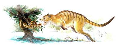 Paleozoology Photograph - Ekaltadeta Prehistoric Rat-kangaroo by Deagostini/uig