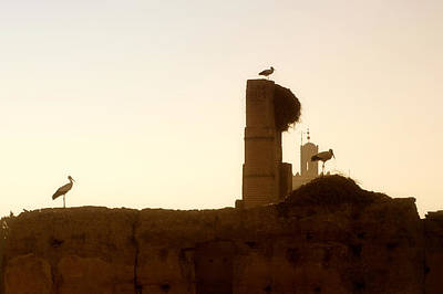 Photograph - El Badi Palace Storks by Mick House