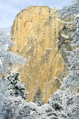 Art Print featuring the photograph El Capitan With Snowy Trees by Judi Baker