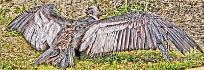 El Condor Original