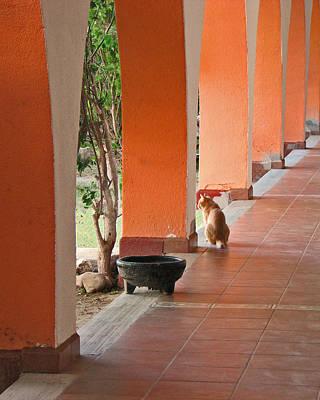 Olla Photograph - El Gato by Marcia Socolik
