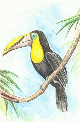 El Tropicano Toucan Original by Sue Bonnar