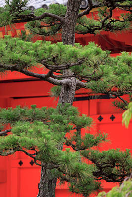 Kansai Photograph - Elaborately Sculpted Pine Trees by Paul Dymond
