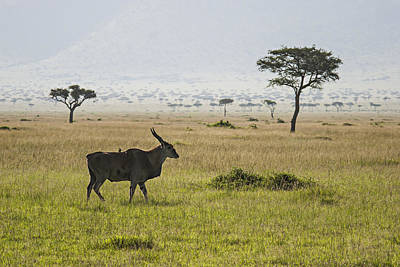 Art Print featuring the photograph Eland In Masai Mara by Antonio Jorge Nunes