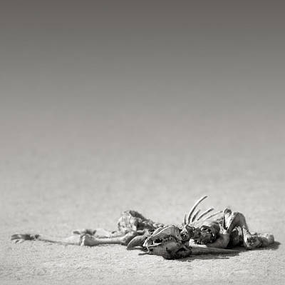 Eland Skeleton In Desert Art Print by Johan Swanepoel