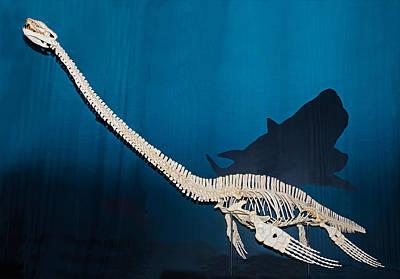 Photograph - Elasmosaurus by Millard H. Sharp