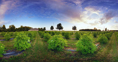 Elderberry Field, Quebec, Canada Art Print by Panoramic Images