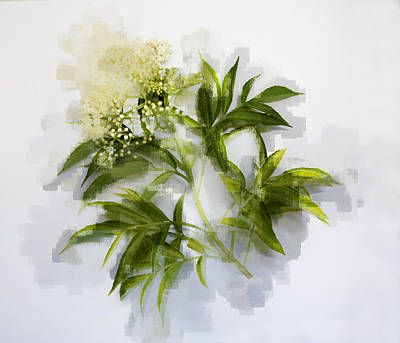 Art Print featuring the photograph Elderberry  by Linde Townsend