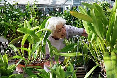 University Of Michigan Photograph - Elderly Woman Examining Plants by Jim West