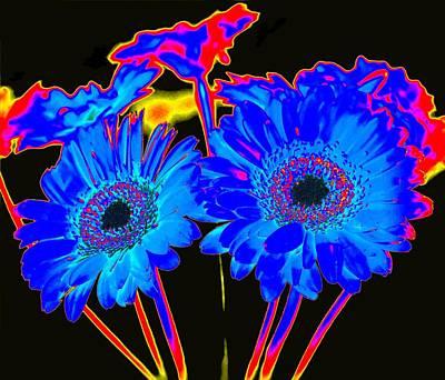 Gerbera Photograph - Electric Blue by Bishopston Fine Art