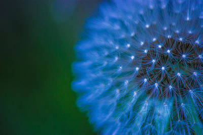 Flower Creations Photograph - Electric Blue by Martin Newman