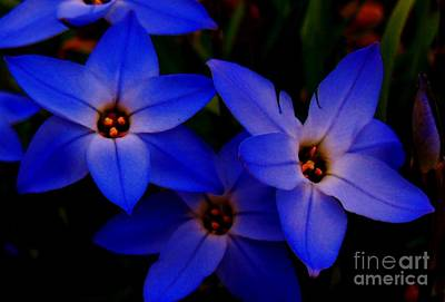 Photograph - Electric Blue by Sharon Costa