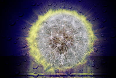 Photograph - Electric Dandelion by Mustafa Abdullah