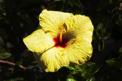 Digital Art - Electric Hibiscus by Photographic Art by Russel Ray Photos