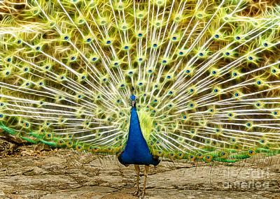 Mayfield Digital Art - Electric Peacock by John Kain