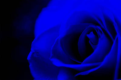 Photograph - Electric Rose by Beverly Stapleton