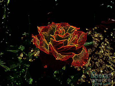 Photograph - Electric Rose by Donna Brown