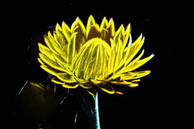 Electric Yellow Art Print by Photographic Art by Russel Ray Photos