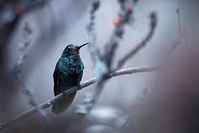Hummingbird Wall Art - Photograph - Electrical Blue by Fabien Bravin